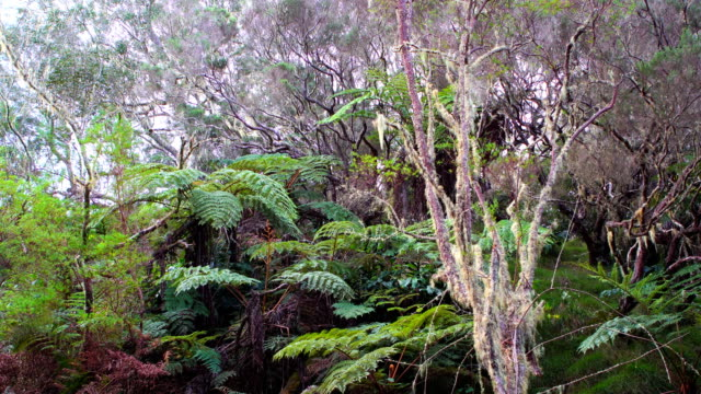 Rainforest in Reunion Island video