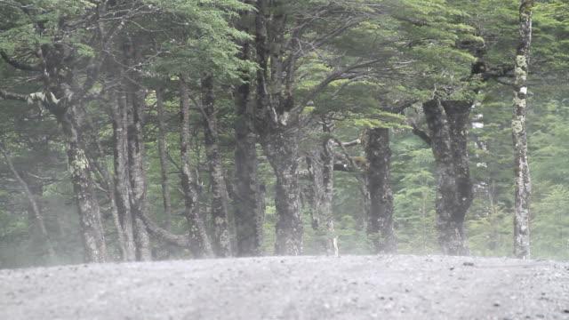 rainforest mist path video