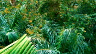 Rainforest plants and trees video