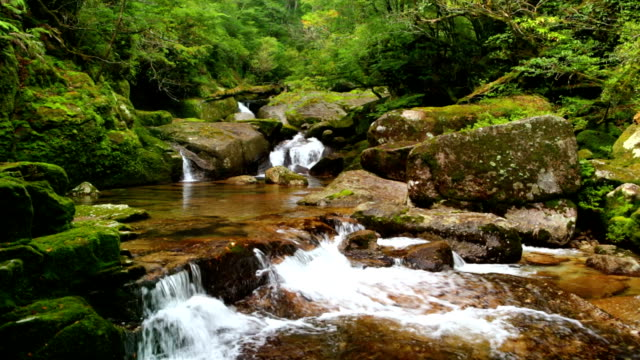 Rainforest river on Yakushima Island, Japan video
