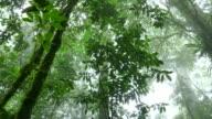 Rainforest Trees Jungle Fog Tenorio Volcano National Park Costa Rica video
