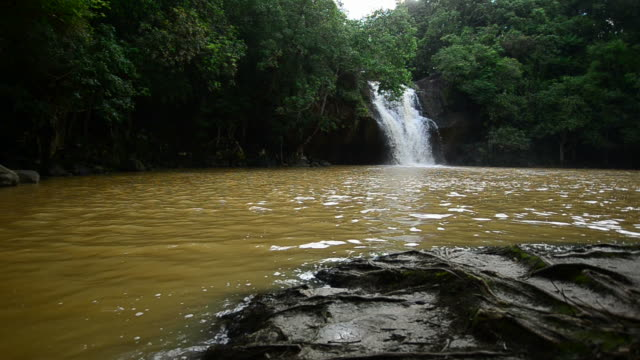 Rainforest waterfalls video
