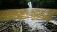Rainforest waterfalls video