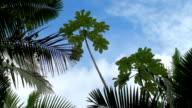 Rainforest-El Yunque video