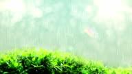raining drops in lights on green leaf video