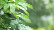 Raining. video