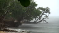 Rainy Island Shore video