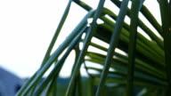 Rainy palm leafs video