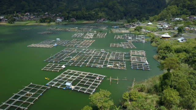AERIAL: Raising Pisces in submerged square fishing bamboo cages on Lake Batur video