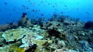 raja ampat coral reef video