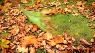 Raking leaves in the fall video
