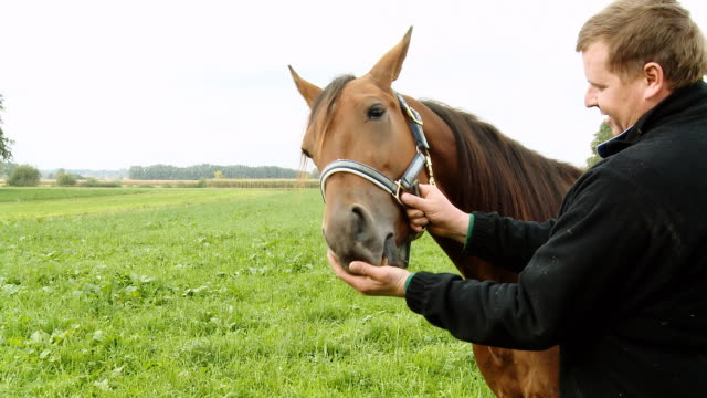 HD: Rancher Feeding Horse video