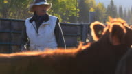 Rancher sorting cattle in holding pens video