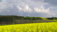 HD Rape Field in Front of a Wind Turbine video