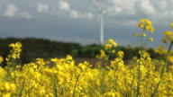 Rapeseed Field In Front Of A Wind Turbine video