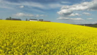 AERIAL Rapeseed Field In Spring (4K/UHD) video