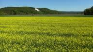 Rapeseed Field In The German Danube Valley Aerial Flyover video