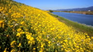 Rapeseed field with Houman river in Kyusyu Japan. video