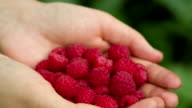 Raspberry Falls Into the Palm video
