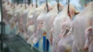 Raw Chicken Meat Processing video