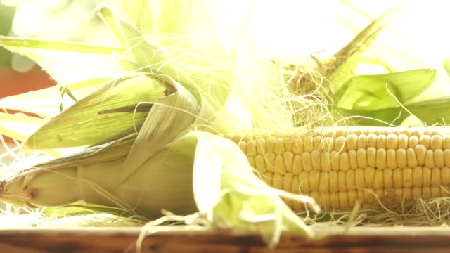 Raw corn cobs with leaves close-up shot video