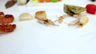 Raw octopuses and raw sea scallops on white table, cam moves to the left, closeup video