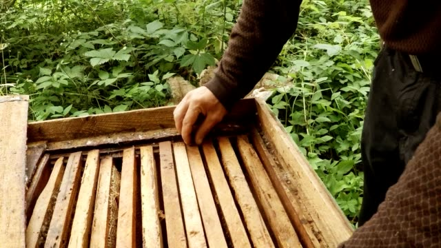 Raws of Frames For Honeycombs in Hive Hands Correct video