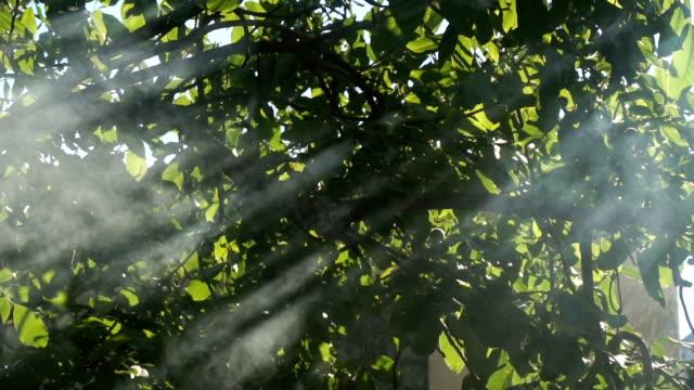 rays shine with smoke through the tree video