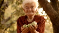 Real People-Senior Woman Collects Fallen Apples. Rural Scene, Hand Picking, video