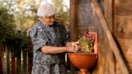 Real People-Senior Woman Planting Flowers, Rural Scene video