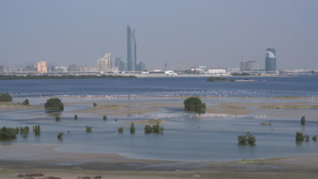 Real Time Dubai wetland park video
