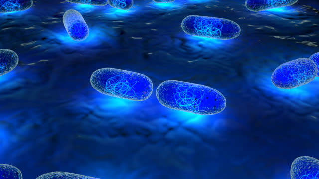 Real to Life Bacteria Multiplying video