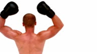 Rear view of boxer raising arms video