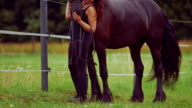 Rear view of woman stroking horse on field video