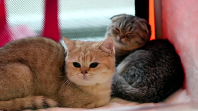 Red and gray cats lie in the box video