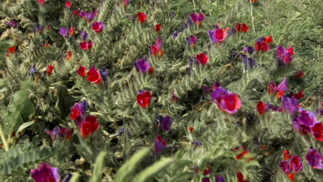 Red and violet flowers in summer field video