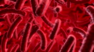 Red Bacteria video