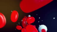 Red blood cells flowing through the bloodstream video