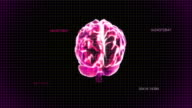 red brain rotate with timecode video
