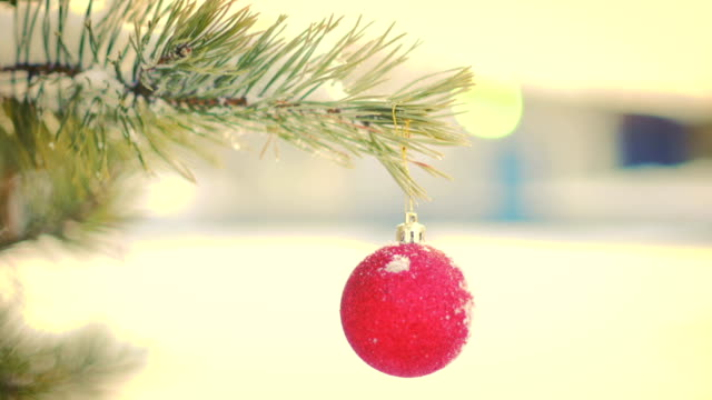 Red Christmas ball hanging on fir tree seamless loop video