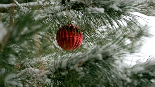 Red Christmas decorations with pine branches video