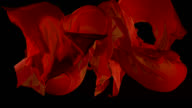 Red fabrics flowing in the air on black background. Slow motion video