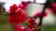 Red flower video