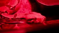 Red Light Python video