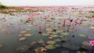 Red Lotus Sea video