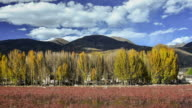 Red meadow under blue sky with Yellow Tree and Mountain in Daocheng, SiChuna, China video