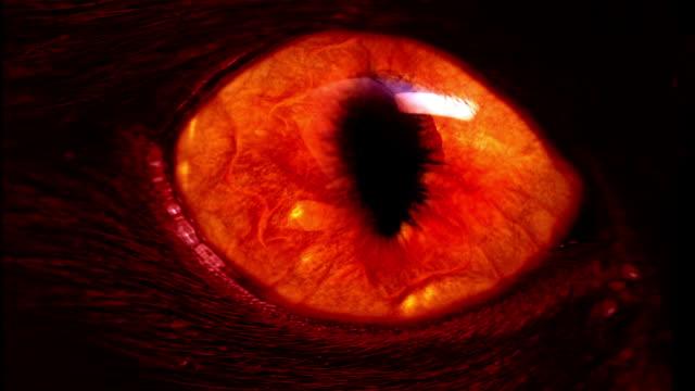 red monster eye video