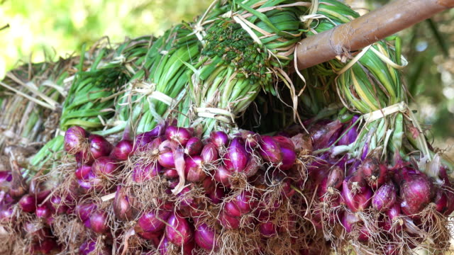 Red Onions video
