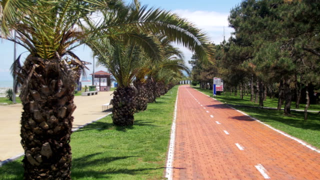 Red Path with Sign for Bicyclists and Palm Trees in the Resort City video