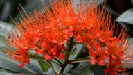 Red Penda and Insects video